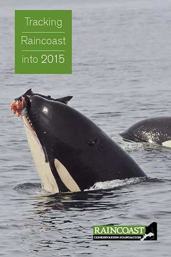 The cover page of our annual report, tracking Raincoast into 2015, featuring a killer whale eating a salmon
