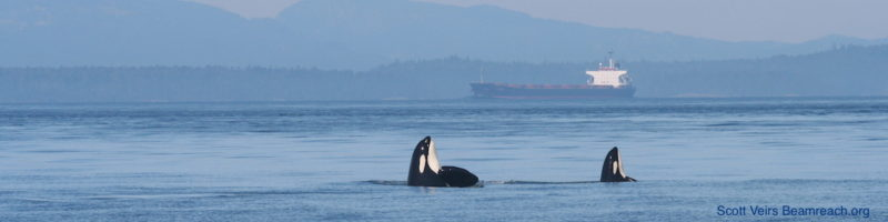 orcas-and-freighter-cropped-scott-veirs-beamreach-banner