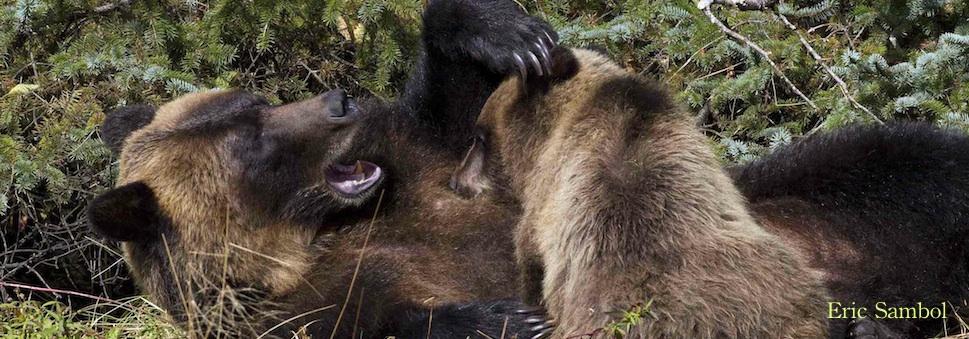 ES-grizzmom cub-banner