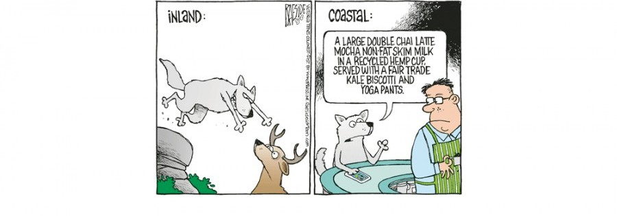 Unique coastal wolves