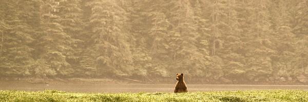 RD-grizz-khutzmateen