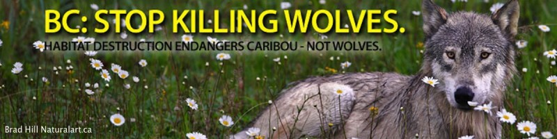 wolf billboard Banner -brad Hill