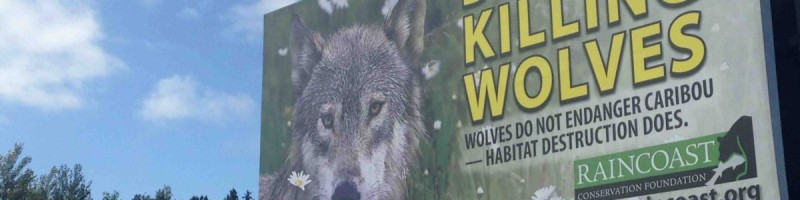wolf cull poster
