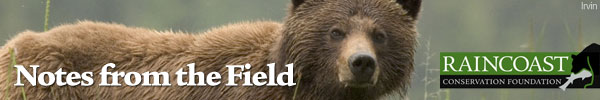 Notes from the Field - A conservation update from the Great Bear Rainforest