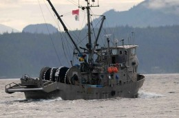 Conservationists slam DFO for chum impacts in commercial fishery