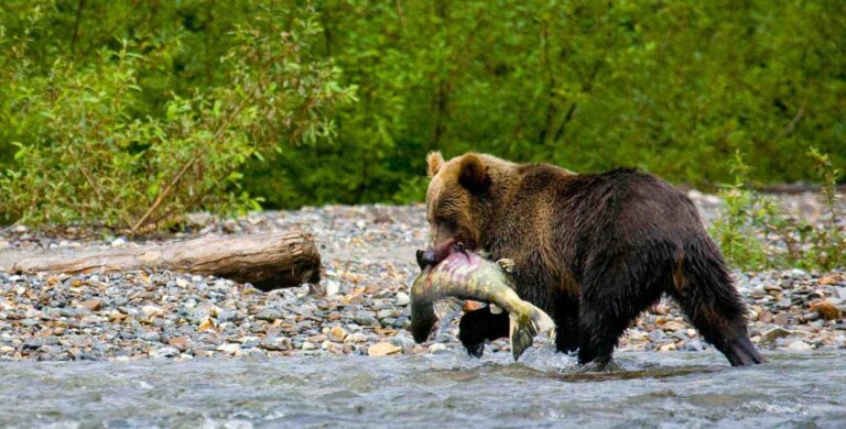 BC conservationists blast federal government for irresponsible salmon fisheries