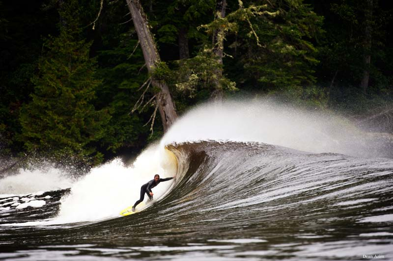 A surfer slides ahead of the curl with giant trees looming in the background