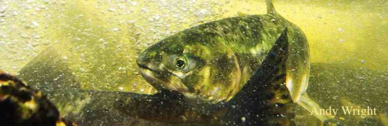 Conservation concerns for DFO's 2016 salmon fishing plan