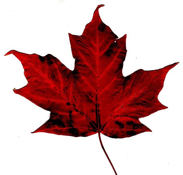 Canadian_maple_leaf