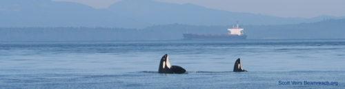 Enbridge, Kinder Morgan, and hope for killer whales