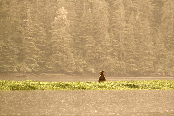 Grizzly visions, dreams and celebrations on Canada Day