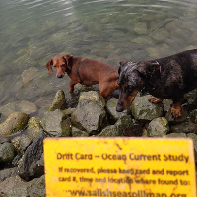 Two dogs play at the rocky shore where a drift card was found