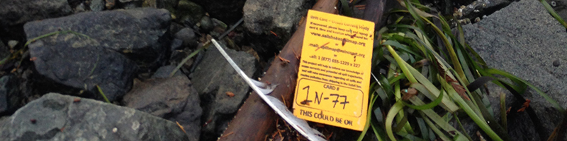 a Drift card that has washed up on a rocky beach