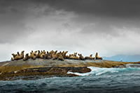 Sea lions huddled on a rocky outcrop while a storm gathers overhead