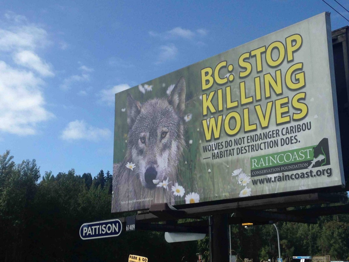 Miley Cyrus, Pamela Anderson are right on BC's wolf cull