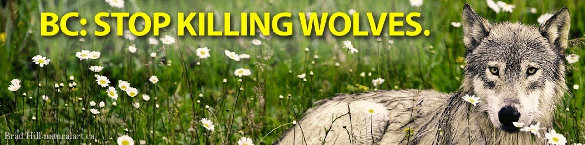 Brad Hill wolf banner photo