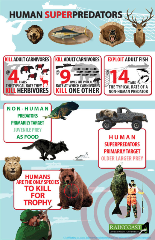 Infographic about human super predators