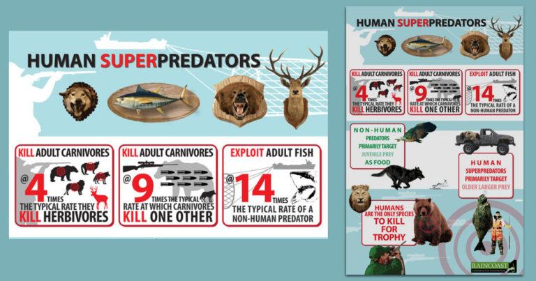 The human super predator revealed