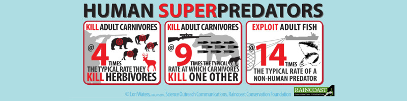 Montage of infographics on the human superpredator.