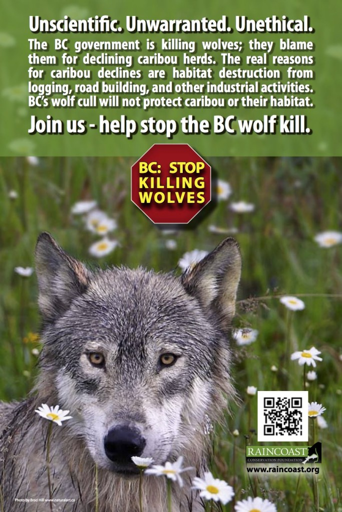 BC Ferries pulls anti-wolf cull ads after complaint