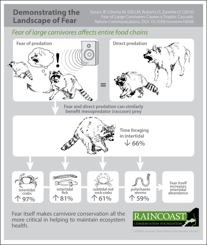 An infographic, demonstrating the landscape of fear, shows how fear of large carnivores affects entire food web.