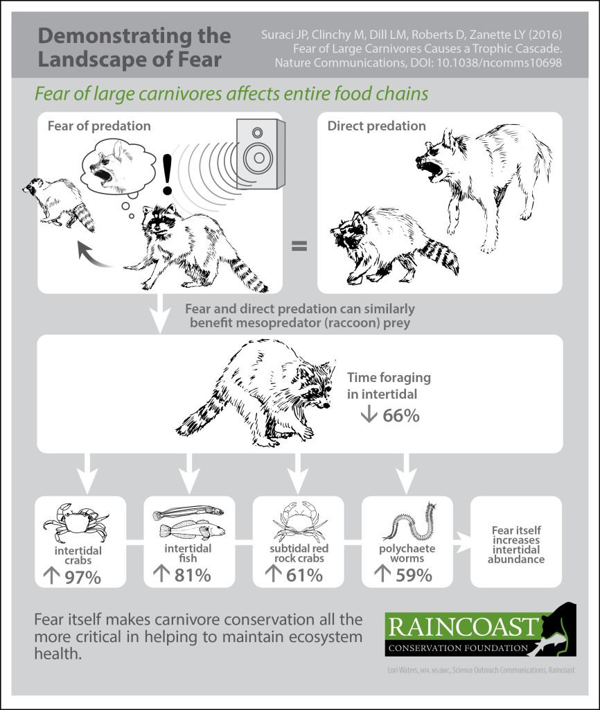 Raincoast predator release infographic