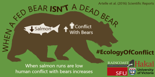 Infographic with stylized bear and salmon, explaining that as salmon runs decrease, human-bear conflicts increase.