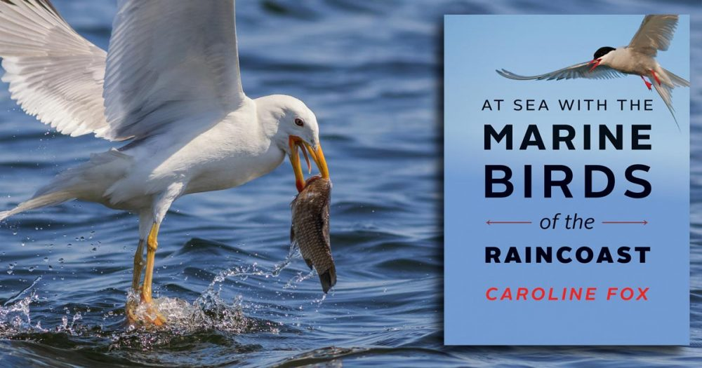 Marine Birds of the Raincoast by Caroline Fox