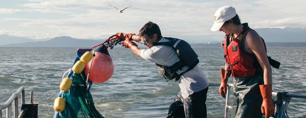 Raincoast biologists toss the net into the water.