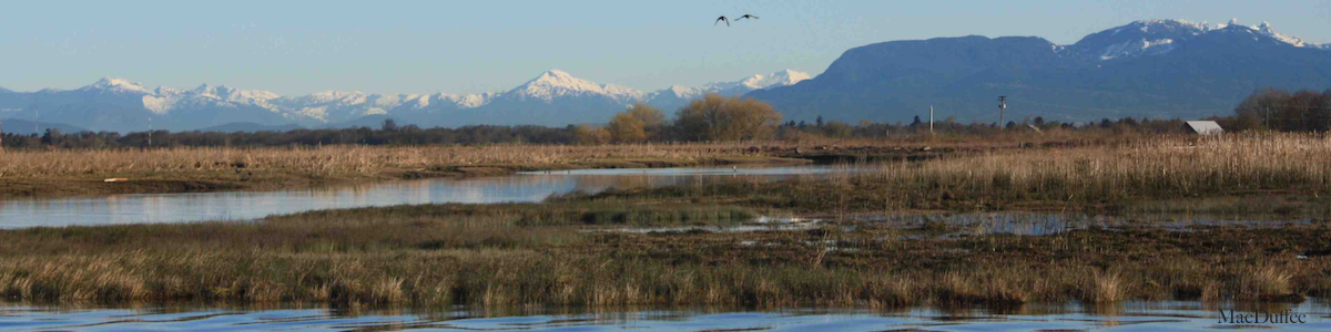 Year 2: Juvenile salmon research in the Fraser River Estuary