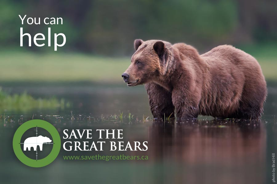 You can help Save the Great Bears