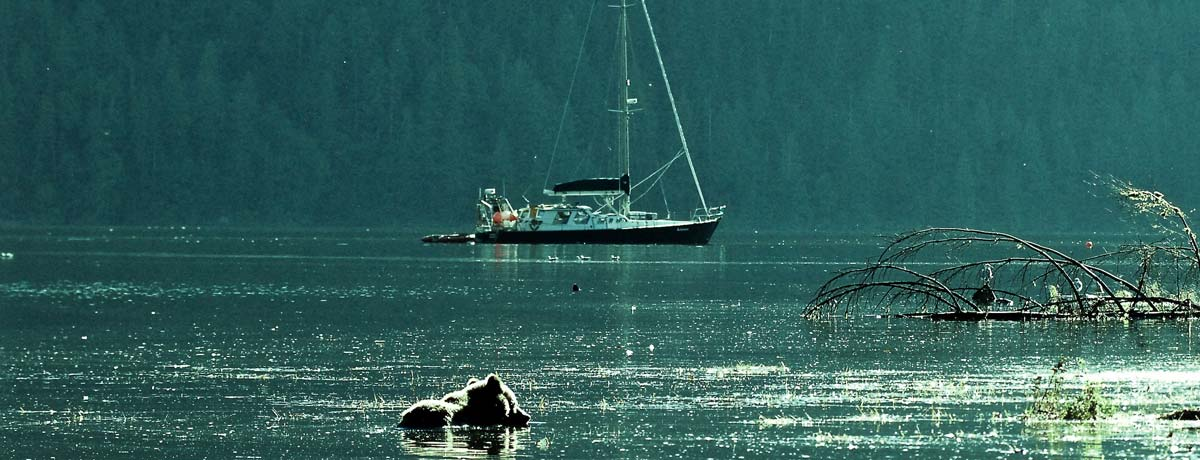 Raincoast vessel Achiever shares the water with a bear and countless other animals.
