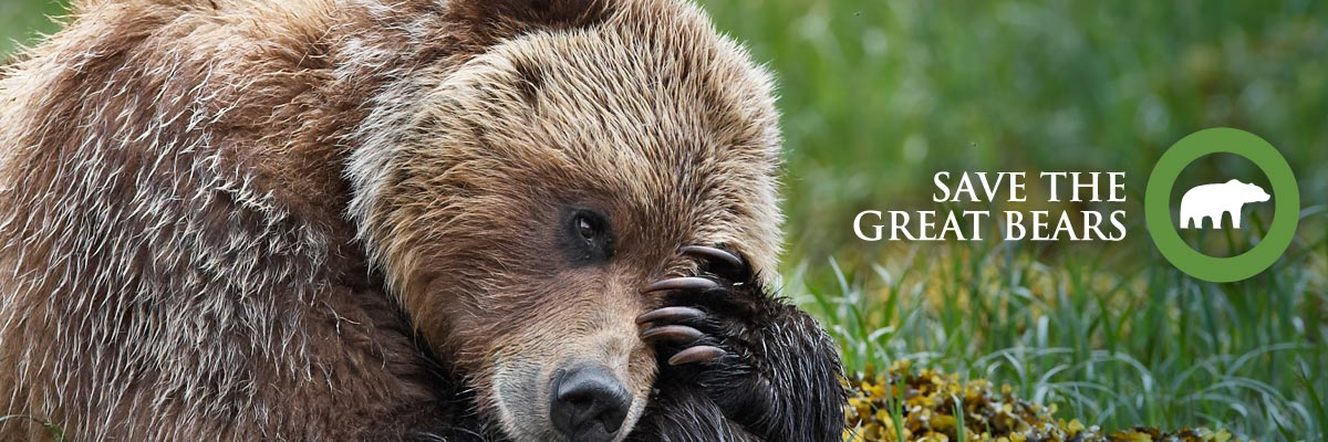 Share our campaign: save the great bears