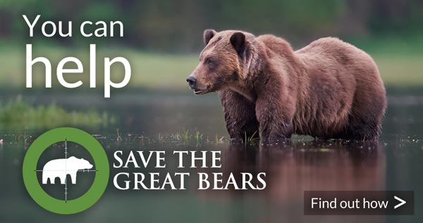You can help Save the Great Bears: find out how
