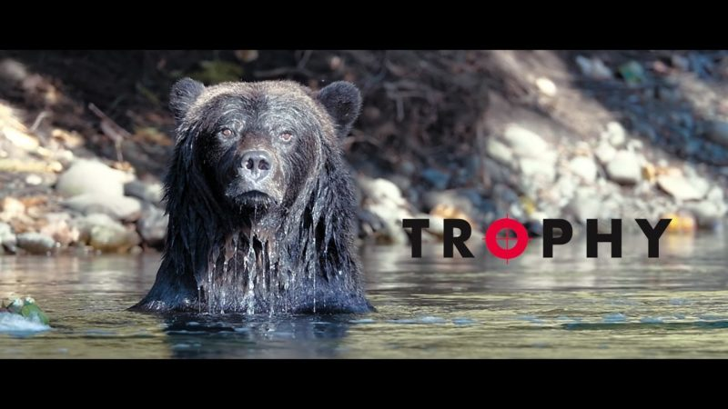 A bear sits in the water: Join us for a screening of the award winning film, Trophy