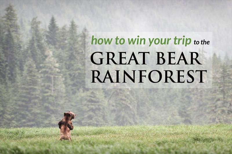 How to win a trip to the Great Bear Rainforest