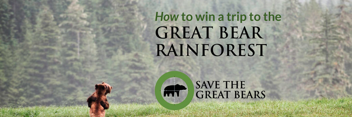 How to win a trip to the Great Bear Rainforest.