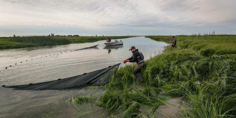 Work with Raincoast scientists in the Fraser Delta estuary