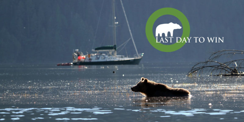 "A grizzly bear wades into the shallows, with Achiever anchored in the background: ""Last day to win"""