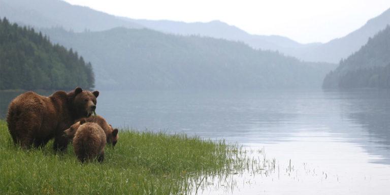 Where the salmon-loving bears roam