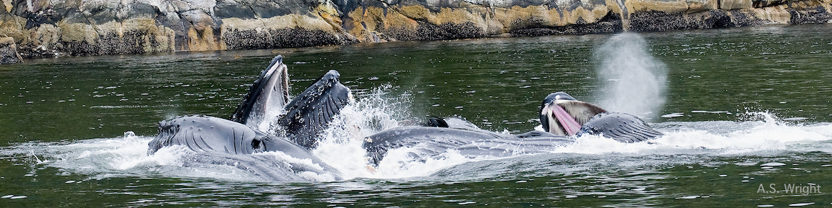Innovative research identifies marine conservation 'hot spots' on BC coast
