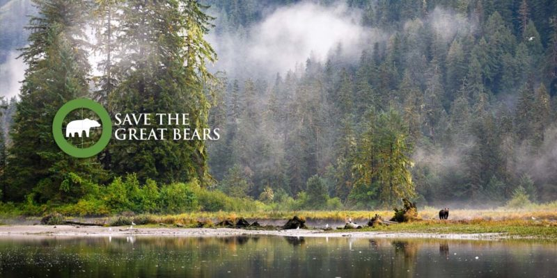 A grizzly bear stands in the long grass on the shores of the Great Bear Rainforest: Save the Great Bears.