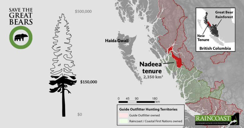 A Sitka Spruce shows how much money we've already raised: $150,000.