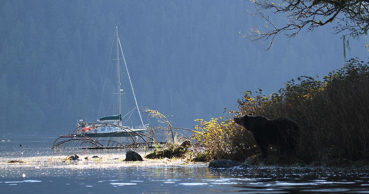 Achiever rests in the water, while a bear sniffs the air in the foreground on an outcropping of land.
