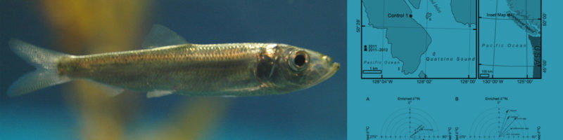 A Pacific herring stops moving for a moment; figures from the research about herring are on the right hand side.