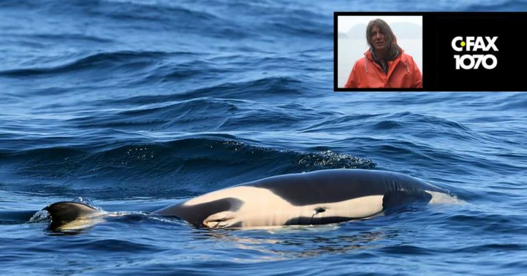 Misty MacDuffee on CFAX 1070 on fishery closures, Chinook salmon and Southern Resident killer whales