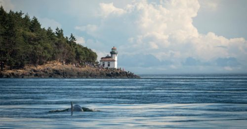 J50 swims toward San Juan Island: a group of people stand by the lighthouse waiting and watching.