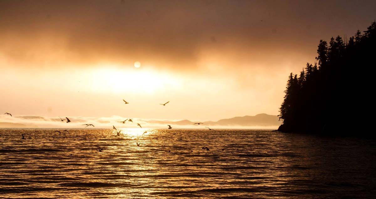 A golden sunset over the ocean on the coast of the Great Bear Rainforest