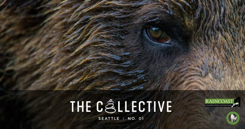 A Grizzly bear looms close up in the background - The Collective logo in the foreground.