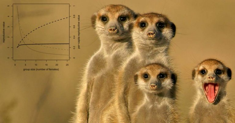 From meerkats to killer whales